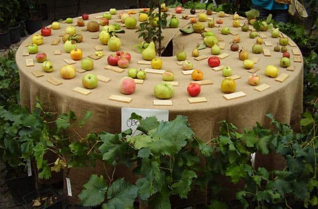 Tra Frutti Antichi E Prati In Fiore