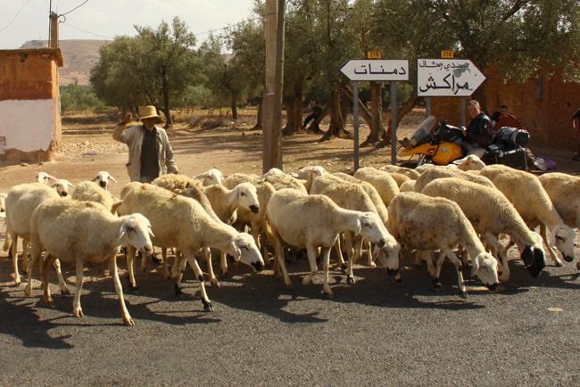 12 verso marrakech