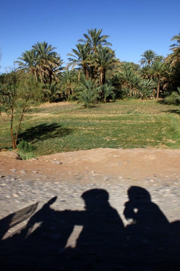10 palmeto del Draa