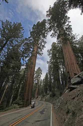 Il Sequoia National Park