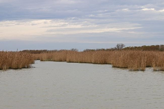 Parco del Delta del Po: una zona da scoprire