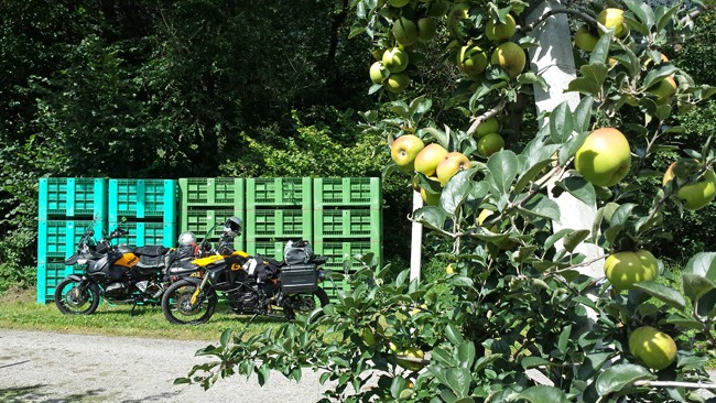 Pausa pranzo tra le mele
