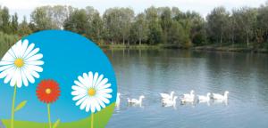Il Fiore e il Lago