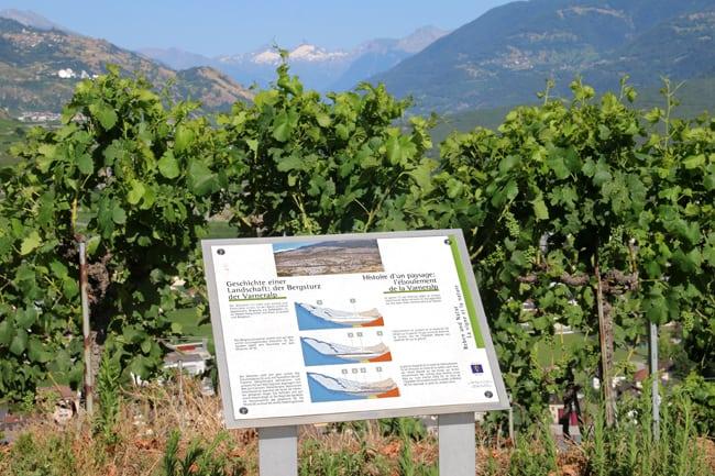 Uno degli 80 pannelli esplicativi dell'attività viticola