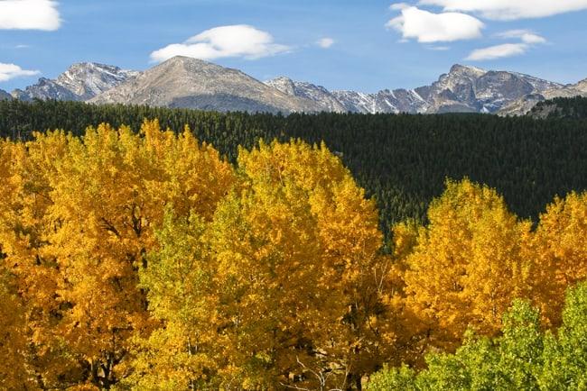 Fall Foliage in Colorado, con le 5 strade panoramiche. Aspens and evergreens in the Colorado Rockies