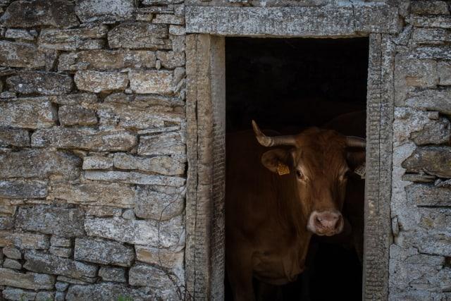 San Paolo in Alpe, rifugio delle mucche nel periodo estivo