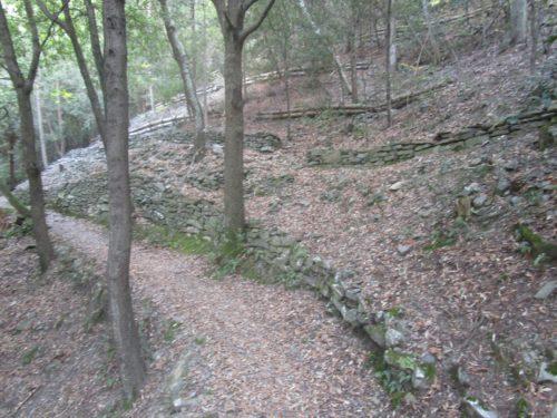sentieri nel parco della pietra serena