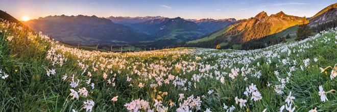 """In Svizzera """" la natura ti rivuole """", selvaggiamente."""