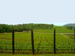 Le vigne della Cantina Kabola