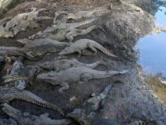 Il parco naturalistico nei pressi della Baia dei Porci
