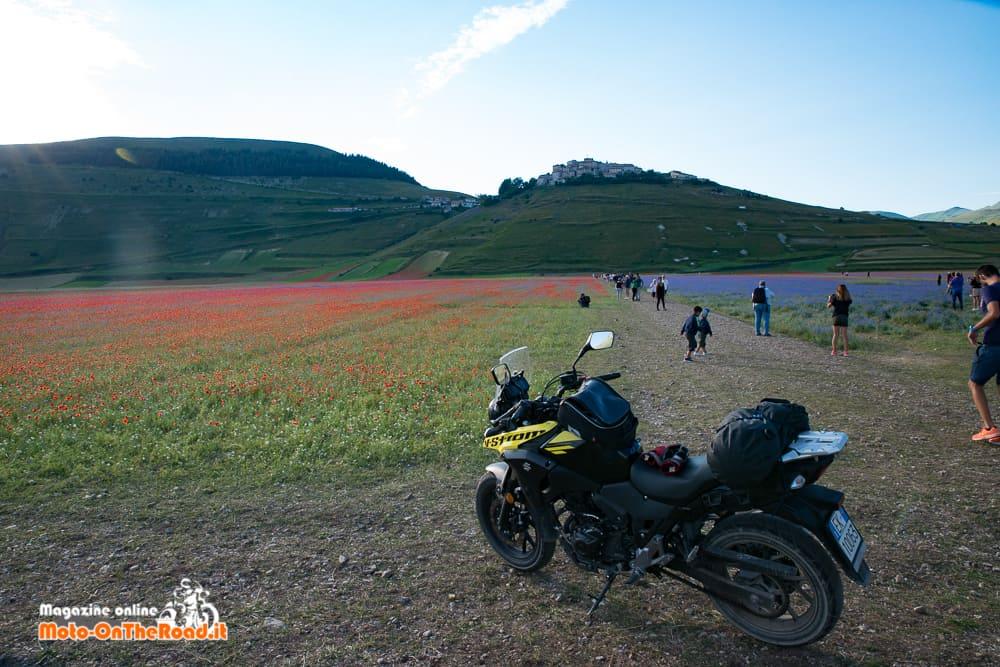 Fioritura dei campi di lenticchie
