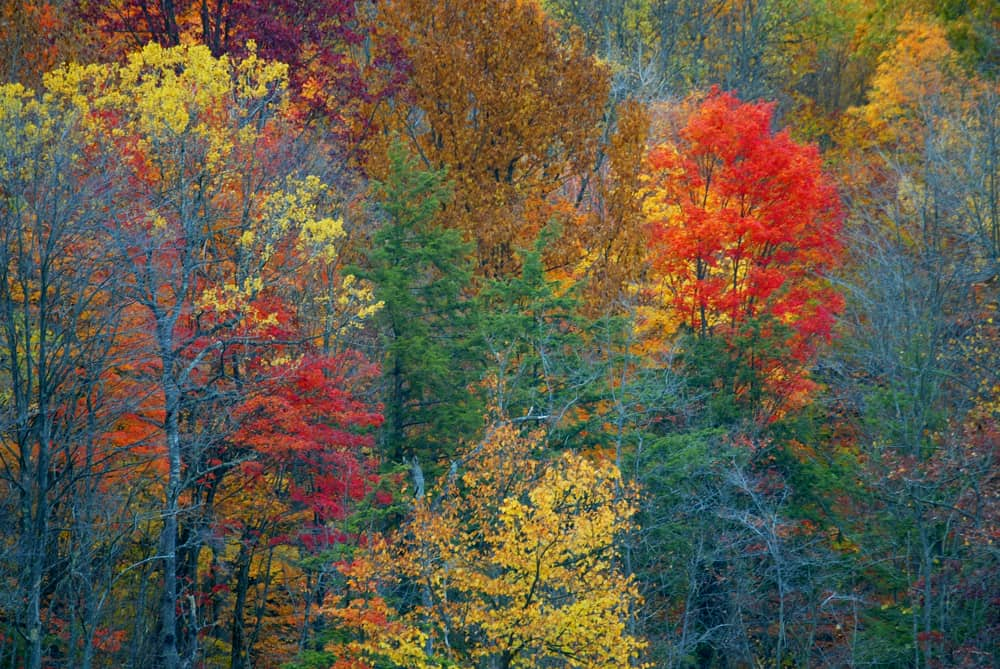 La famosa Indian Summer in Pennsylvania, fotografata da Claudio Falanga