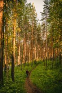 Visit Saimaa - Saimaa forest