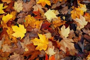 Foliage - Foto di John Evans