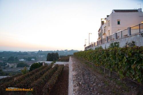 Locorotondo - Azienda Agricola Bufano